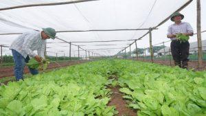 """Doanh nghiệp nông nghiệp """"lao đao"""" vì người tiêu dùng chạy theo hàng giá rẻ"""