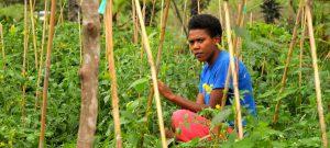 """LHQ cam kết giúp ngành nông nghiệp quần đảo Thái Bình Dương """"sống sót"""" qua khủng hoảng khí hậu"""